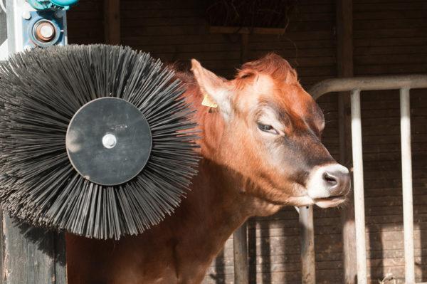 spazzole per allevamenti di animali