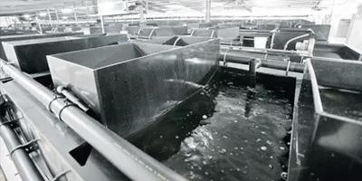 spazzole per allevamenti ittici - spazzole per itticoltura